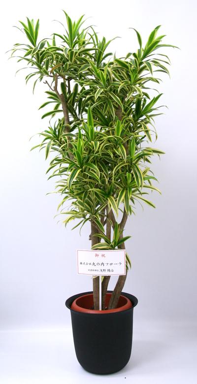 開院 祝い 観葉 植物 開店・開業祝いの観葉植物10選!選び方と縁起のよい種類は?